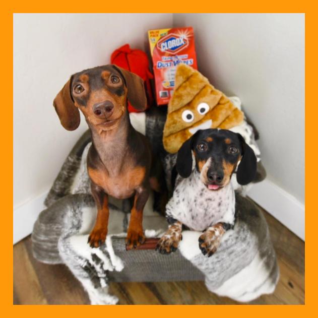 حیوانات-خانگی-معروف